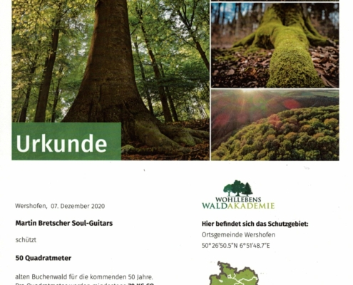 Buchen-UrwaldProjekt